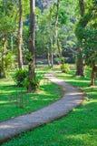 Der konkrete Gehweg im Garten Stockfotografie