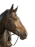 Der Kopf des Pferds Stockbilder