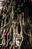 Der Kopf des Sandsteins Buddha im Baum wurzelt bei Wat Mahathat, Ayut Lizenzfreies Stockbild