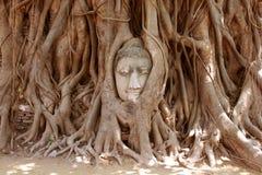 Der Kopf des Sandsteins Buddha im Baum wurzelt bei Wat Mahathat, Ayut Stockfotos