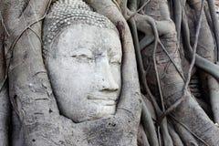 Der Kopf von Buddha Lizenzfreies Stockfoto