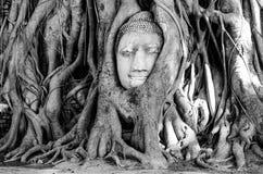 Der Kopf von Buddha Stockfotos
