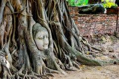 Der Kopf von Buddha im Baum Lizenzfreies Stockbild