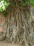 Der Kopf von Buddha-Statue im Baum wurzelt, Wat Mahathat-Tempel Lizenzfreie Stockbilder