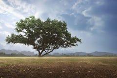 Der Landschaftshintergrund des Feldes Lizenzfreie Stockfotografie