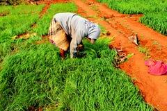 Der Landwirt auf dem Gebiet Lizenzfreies Stockfoto