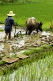 Der Landwirt, der im paddyfield arbeitet. Stockfotografie