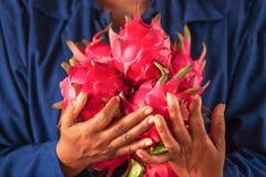 Der Landwirt, der Drachen hält, trägt Früchte, oder Pitaya ist in den Händen reif Colorfu lizenzfreie stockfotos