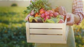 Der Landwirt hält eine Holzkiste mit Frischgemüse Organisches Landwirtschaftskonzept stockfotos