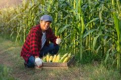 Der Landwirt hob seinen Daumen zum Zuckermais an, um sein Vertrauen in seinem Mais zu zeigen stockfoto