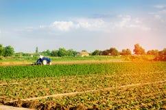 Der Landwirt kultiviert das Feld mit einem Traktor Landwirtschaft, Gemüse, organische Agrarprodukte, Agro-Industrie ackerland stockfotos