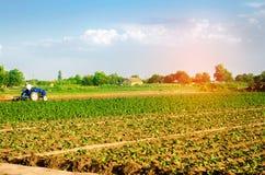 Der Landwirt kultiviert das Feld mit einem Traktor Landwirtschaft, Gemüse, organische Agrarprodukte, Agro-Industrie ackerland lizenzfreies stockfoto
