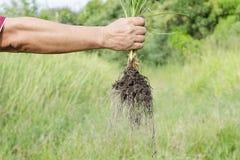 Der Landwirtlandwirt nehmen Gras im Garten zurück Lizenzfreies Stockfoto