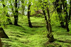 Der langerwartete Frühling Stockbild