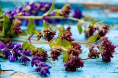 Der Lavendel auf der alten schäbigen Farbe im Dorf Der Sommer Lizenzfreie Stockfotografie
