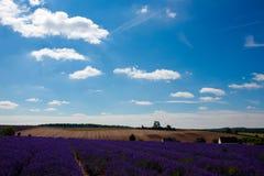 Der Lavendelbauernhof in der Sommerzeit stockfotos