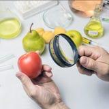 Der Lebensmittelsicherheitsinspektor prüft Frucht vom Markt Hält eine Lupe in seiner Hand stockfotografie