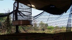 Der leere Käfig für den Vogel im Zelt stock video