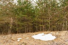 Der letzte Schneeflecken, ein bewölkter Tag des Frühlinges im Wald, vom geschmolzenen Schnee können Sie das trockene Herbstgras s Stockbilder