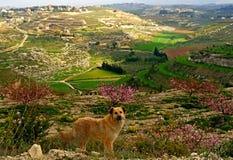 Der Libanon, am 21. Mai Stockfoto