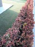 In der Linie Szene von Anlagen im schönen Garten stockbilder