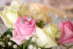 Der Link auf der Rose Stockfotos