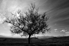 Der loneley Baum Stockfotos