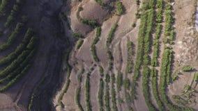 Der Luftschuß sehr, der niedrig über Bäume fliegt und scheuern sich in der Wildnis schuß Vogelperspektive, die über Wüste bei Son stock video footage