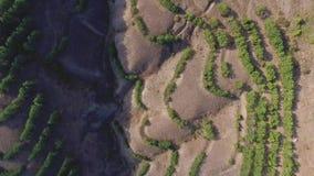 Der Luftschuß sehr, der niedrig über Bäume fliegt und scheuern sich in der Wildnis schuß Vogelperspektive, die über Wüste bei Son stock video