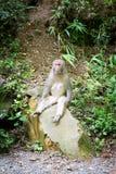 Der lustige Affe, der auf einem Felsen sitzt, mögen einen Mann in einem wilden Wald Lizenzfreies Stockfoto