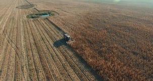 Der Mähdrescher entfernt Weizenfelder Ernten Sie den gereiften Weizen stock video footage