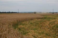 Der Mähdrescher mäht den Weizen stockbild