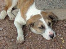 Der müde Hund liegt auf der Erde Stockfoto