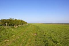 Der Münster-Weisenfußweg auf den Yorkshire-Wolds im Frühjahr Stockbilder