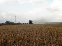 Der M?hdrescher m?ht Gras auf dem Sommergebiet Ernten nach der Sommersaison Details und Nahaufnahme stockfoto
