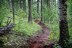 Der magische Wald Stockfotografie