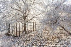 Der magischen Naturkälte Landschaft Parkszene des Winters weiße gefrorene schneebedeckte stockfotografie