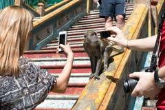 Der Makaken-Affe, der auf Schritten beim Batu sitzt, höhlt, Kuala Lumpur aus, Lizenzfreies Stockbild