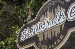 Der Makaken, der auf der Fahne, Gibraltar, Europa sitzt lizenzfreie stockbilder