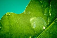 Der Makroschuß des Wassers fällt auf Blatt. Lizenzfreies Stockbild