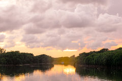 der Mangrovenwald am warmen Ton der Flussmündung im Sonnenlicht Lizenzfreies Stockbild
