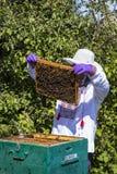 Der Mann arbeitet in einem Bienenhaus Bienenhonig sammelnd stockfoto