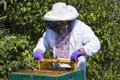 Der Mann arbeitet in einem Bienenhaus Bienenhonig sammelnd stockfotos