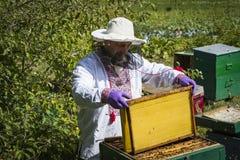 Der Mann arbeitet in einem Bienenhaus Bienenhonig sammelnd lizenzfreies stockbild