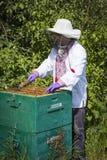 Der Mann arbeitet in einem Bienenhaus Bienenhonig sammelnd stockbilder