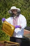 Der Mann arbeitet in einem Bienenhaus Bienenhonig sammelnd lizenzfreie stockbilder