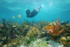 Der Mann, der unter Wasser schnorchelt, schaut Rifffische Stockbilder