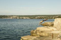 Der Mann herein springend zum Meer Stockbilder