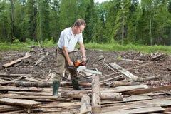 Der Mann im Holz sägt einen Baum eine Kettensäge Stockbild
