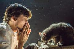 Der Mann ist zu einer Katze allergisch Ein Mann niest wegen der Tatsache, die nahe bei einem Haustier stockfoto